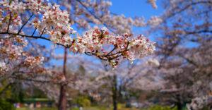「平成」最後なのでカメラを持って武蔵一宮氷川神社へ